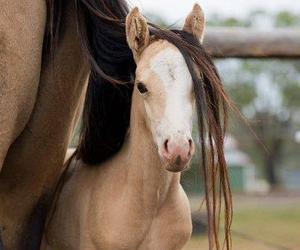 baby, chevaux, and horses image