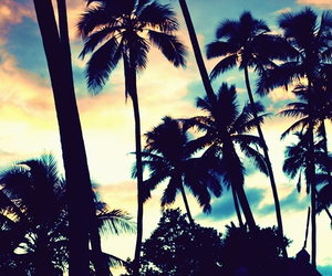 summer, palm, and sky image