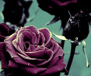 rose, flowers, and dark image