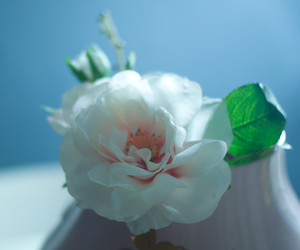 flower, pretty, and white image