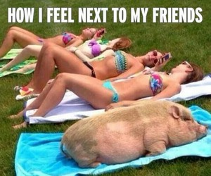 pig, feel, and funny image