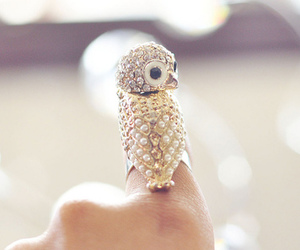 cute, owl, and ring image