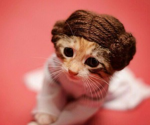 cat, cute, and star wars image