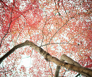 leaves, photography, and pink flowers image