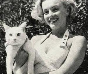 cat, Marilyn Monroe, and blonde image