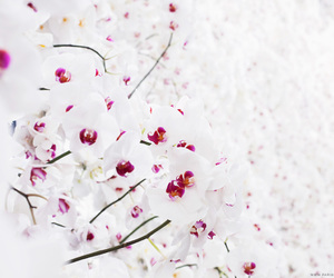 flowers, beautiful, and dior image