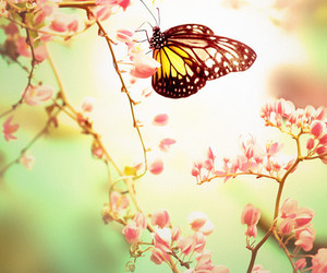 butterfly, flowers, and spring image