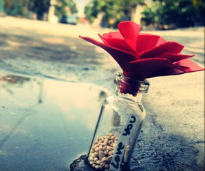 love, flowers, and bottle image