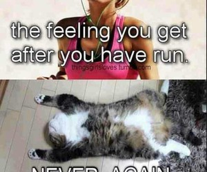 funny, cat, and run image