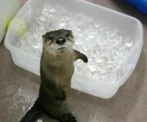 animal, ice, and shit image