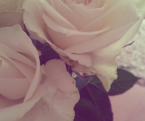 background, rose, and roses image