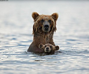 bear, animal, and water image