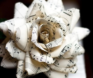 music, rose, and music paper image