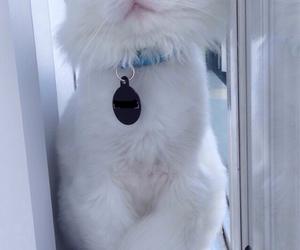 animal, cat, and heterochromia image