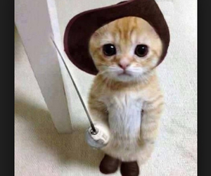 boots, hat, and cat image