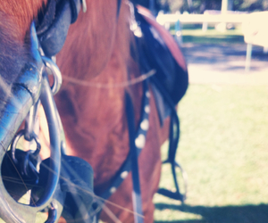 bit, equine, and gear image