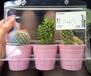 pink, cactus, and plants image