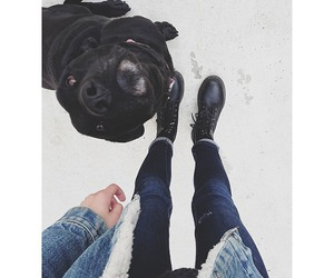 dog, jeans, and black image