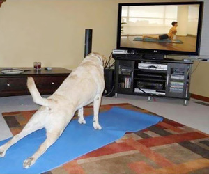 animal, fitness, and yoga image