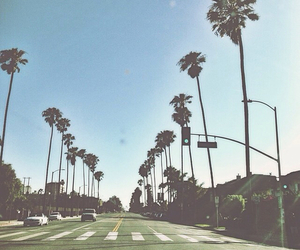 summer, palm trees, and street image