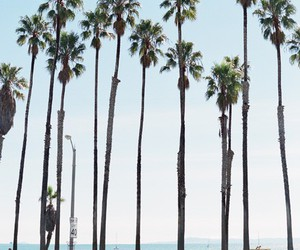 california, palm tree, and travel image