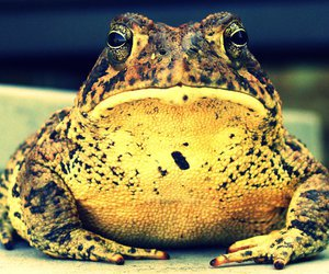 amphibian, frog, and photography image