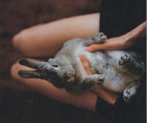 animal, girl, and hand image