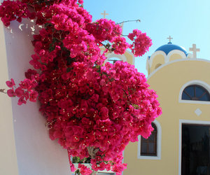 church, floral, and bugambilia image