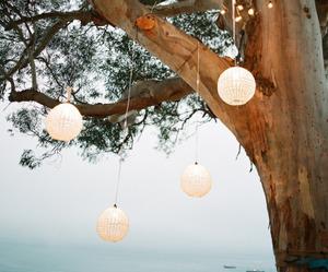 tree and light image
