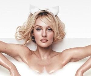 angels, cat, and Victoria's Secret image