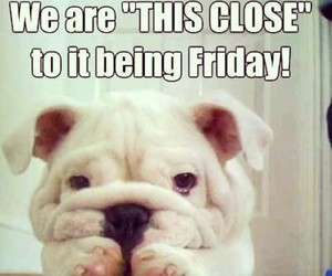 friday, funny, and dog image
