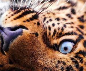 animal, eyes, and beautiful image