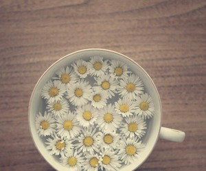 flowers, relax, and te image