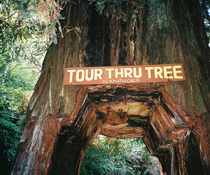 tree, tour, and nature image
