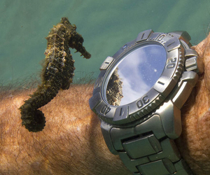 watch, seahorse, and sea image