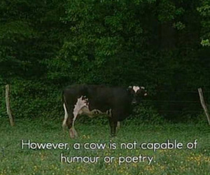 cow, funny, and fun image