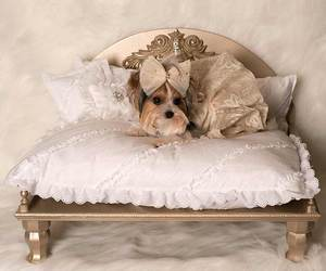 cats, dogs, and furniture image
