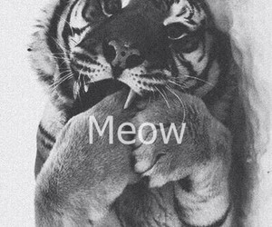 kitty, tiger, and cute image