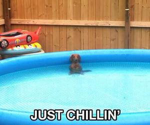 chillin, dogs, and funny image