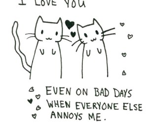 love, cat, and quotes image