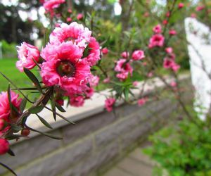 flowers, flor, and cute image