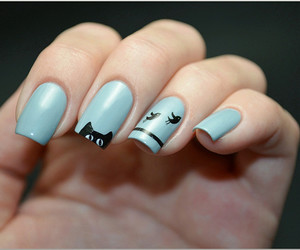 nails, cat, and birds image