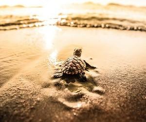 turtle, cute, and sea image