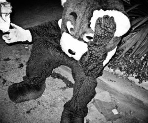 black and white, photography, and teddy bear image