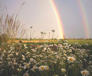 rainbow, flowers, and landscape image