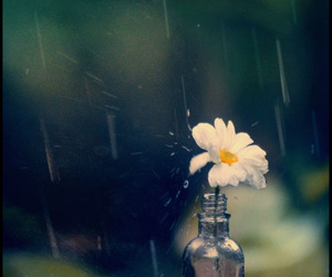 rain, flowers, and bottle image