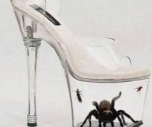 shoes, spider, and heels image