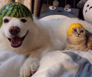 <3, dog, and cat image