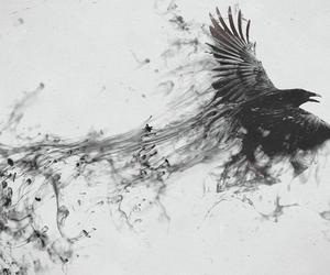bird, gothic, and dark image