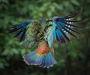 bird, animal, and nature image